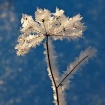 Кристальный цветок